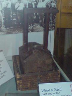 A similar mouse-trap on display at the Vale and Downland Museum, Wantage. Photo by author
